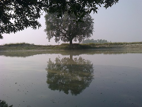Duck pond, harriya village India.jpg