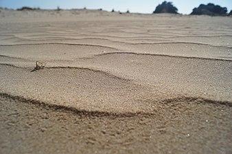 Dunas de Doñana.jpg
