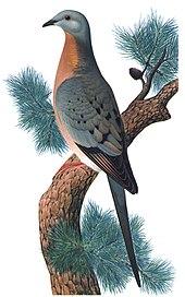 Extinction - Wikipedia