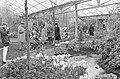 Eerste bezoekers in kassen van Keukenhof, Bestanddeelnr 925-4953.jpg