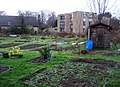 Empty Common Allotments - geograph.org.uk - 647761.jpg