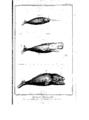 Encyclopedie volume 5-048.png