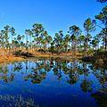 Ephemeral Pond (5414621860).jpg