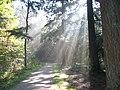 Ergens in Park Hoge Veluwe - panoramio.jpg