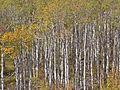 Fall Colors 9-2006 620-DVD (3699010865).jpg