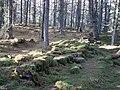 Falls of Bruar woods, Blair Atholl, Perth & Kinloss.jpg