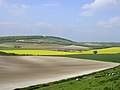 Farmed chalk downland north of Teglease Down - geograph.org.uk - 26180.jpg