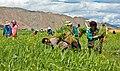Farmer in Tibet.jpg