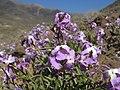February flowers - panoramio.jpg