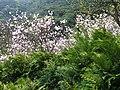 Fengshuhu 楓樹湖 - panoramio.jpg
