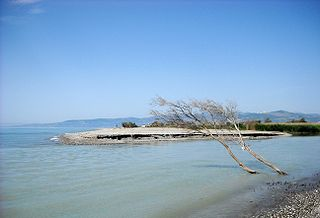 Sinni (river)