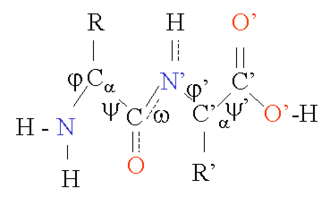 Protein structure prediction - Bond angles for ψ and ω