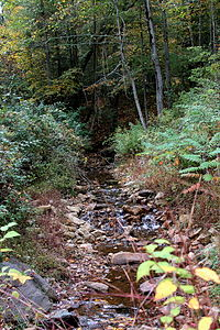 Fisher Run looking upstream.JPG