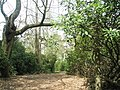 Fitzhall Plantation - geograph.org.uk - 778700.jpg