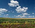 Flickr - Nicholas T - Big Sky (1).jpg