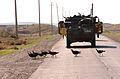 Flickr - The U.S. Army - Turkey stoplight.jpg