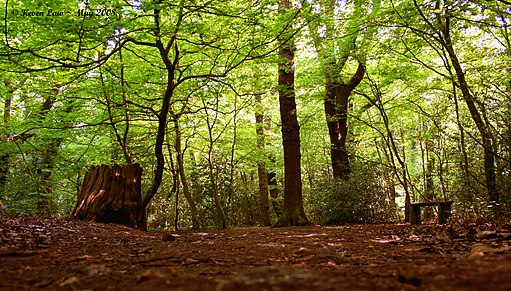 Flickr - law keven - If you go down to the woods today...