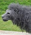 Flipped Wire Lion Detail.jpg