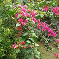 Flora Indonesia 004-MPA.jpg