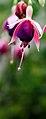 Florecilla (3771090699).jpg