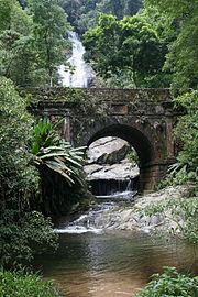 Floresta da Tijuca 09