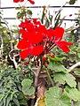 Flower20180523 101307.jpg