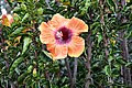 Flower (44271522820).jpg