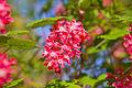 Flower 2692.jpg