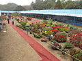Flower Show 2012 - Indian Botanic Garden - Howrah 2012-01-29 1763.JPG