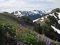 Flowers mountain scenic BBaccus (17301656701).jpg