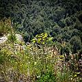 Flowers on a ridge (5366307426).jpg