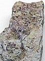 Fluoritized fenestrate bryozoans (Mississippian; near Cave-in-Rock, Illinois, USA) (35176451743).jpg