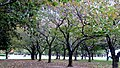 Flushing Meadows Corona Park, Queens, NY, USA - panoramio (10).jpg