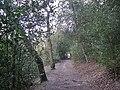 Footpath in Upper Nut Hurst - geograph.org.uk - 1755292.jpg