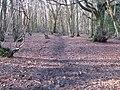 Footpath in West Wood - geograph.org.uk - 1703941.jpg
