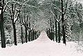 Forest (33129273).jpeg