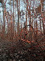 Forest - Guelph 02.jpg