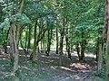 Forest - panoramio - paulnasca (78).jpg