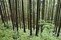 Forest in Mt.Tsukiore 05.jpg