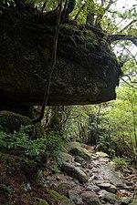 Forest in Yakushima 35.jpg