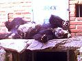 Foto wikipedi zoologico.jpg