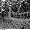 Fotothek df ps 0001136 Bäume.jpg