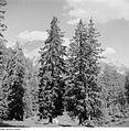 Fotothek df ps 0001796 Bäume ^ Landschaften ^ Hügellandschaften - Gebirgslandsch.jpg