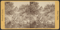 Fountain at Fifth Avenue entrance, from Robert N. Dennis collection of stereoscopic views.png