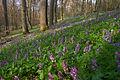Frühlingswald IV.jpg