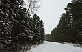 Fresh Snow - Banning State Park, Winter in Minnesota (38999852304).jpg