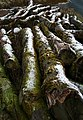 Frosty Logs in Coverdale - geograph.org.uk - 635441.jpg