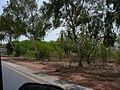 Gambia Banjul-Serekunda Highway 0007.jpg