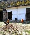 Gamlegårds innergård med höns.JPG