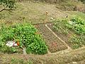Gaobei Village - vegetable garden - DSCF3242.JPG